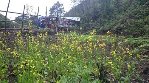 Vườn rau được lâm tặc gieo trồng ngay trong rừng sâu để tự túc về thức ăn phục vụ cho công việc phá rừng