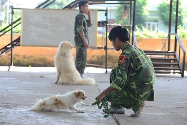 Mỗi khóa đào tạo chó chuyên nghiệp kéo dài khoảng 3 tháng với chi phí trên chục triệu đồng. Ảnh: Ngọc Lan.
