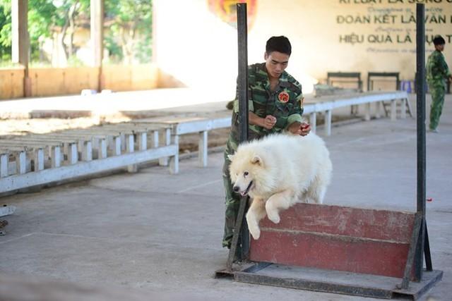 Chó được tham gia lớp học vượt chướng ngại vật từ tháng thứ 2. Ảnh: Ngọc Lan.
