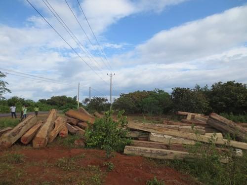 Liên tục phát hiện vận chuyển gỗ lậu quy mô lớn ở Tây Nguyên - ảnh 2