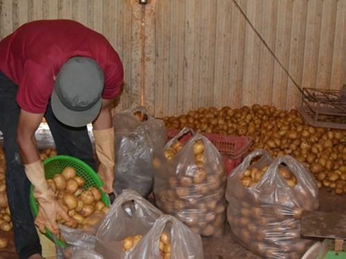 """Bất ngờ """"mở cửa"""" lại cho khoai tây Trung Quốc vào chợ nông sản Đà Lạt"""