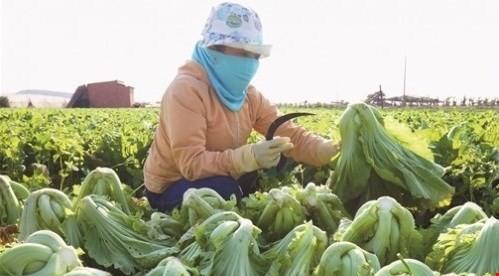 Đầu tư nông nghiệp: Miếng ngon hay khúc xương?
