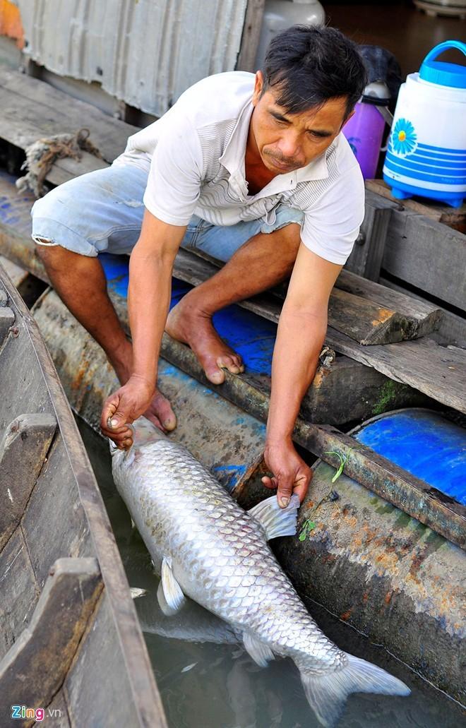 Vớt hàng chục tấn cá chết bán cho người nuôi heo