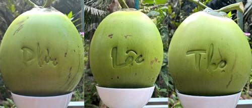 Giá bán mỗi trái dừa độc lạ này gấp 60 lần bình thường. Ảnh: Cửu Long