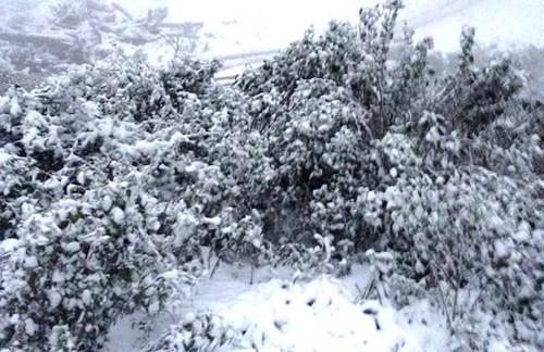 Tuyết trắng xóa Nghệ An, Thanh Hóa