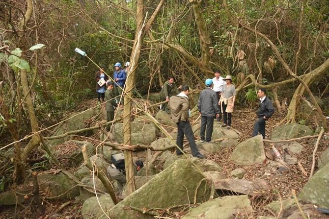 Đà Nẵng: Thêm một tiểu khu rừng bảo tồn Sơn Trà bị chặt phá