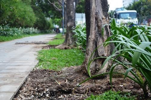 cây xanh, bức tử, hóa chất, quận 2, chết khô