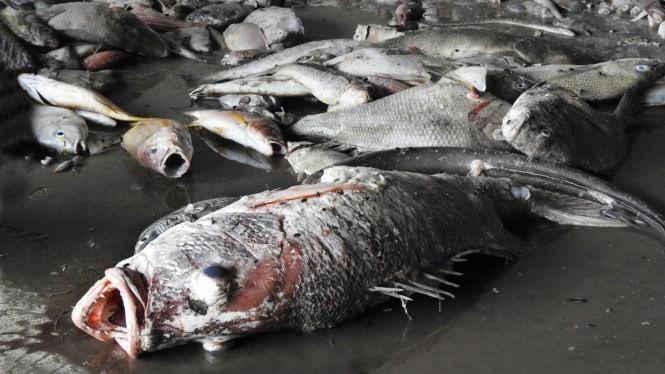 Bộ Tài nguyên và môi trường: Hiện tượng cá chết hàng loạt có thể tiếp diễn