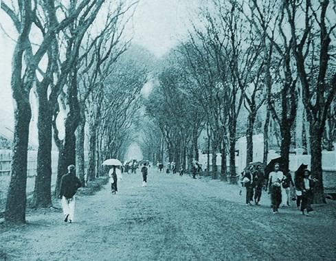 Cây xanh trên đường Duy Tân (nay là đường Phạm Ngọc Thạch) - Ảnh tư liệu của nhiếp ảnh gia Tam Thái