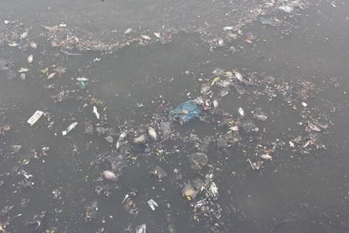 Nhiều người dân khu vực này cho biết, từ chiều hôm qua (16.5) trên kênh Nhiêu Lộc – Thị Nghè đã xuất hiện hàng ngàn con cá chết nổi dày đặc trên mặt nước