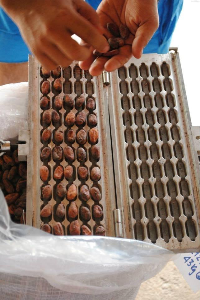 Đây là dụng cụ dùng để kiểm tra chất lượng hạt cacao. Mỗi hạt cacao tiêu chuẩn có trọng lượng không quá 1g, với độ ẩm không quá 7%. Ảnh: Beaucacao.