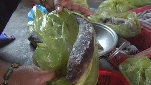 Phóng sự thảm họa cá chết Việt Nam rúng động Đài Loan - ảnh 5