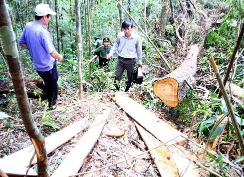 """Hiện trường vụ phá rừng Pơmu ở biên giới Việt – Lào: """"Quá khủng khiếp!"""" 1"""