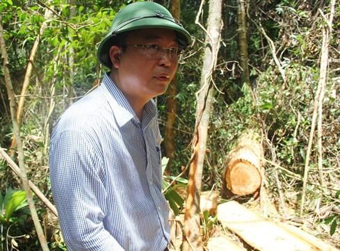 """Hiện trường vụ phá rừng Pơmu ở biên giới Việt – Lào: """"Quá khủng khiếp!"""" 4"""