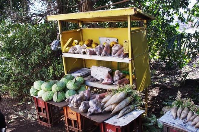 Một gian hàng tự phục vụ, bán củ cải trắng, bắp cải, cà rốt và nhiều nông phẩm khác được thu hoạch từ nông trại Nerima cách đó không xa, thuộc tỉnh Saitama thuộc vùng Kanto miền Trung nước Nhật - Ảnh: Narima Farm.