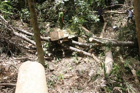 'Chảy máu' rừng phòng hộ Vĩnh Linh: Thủ tướng lên tiếng, địa phương họp... truy trách nhiệm - ảnh 1