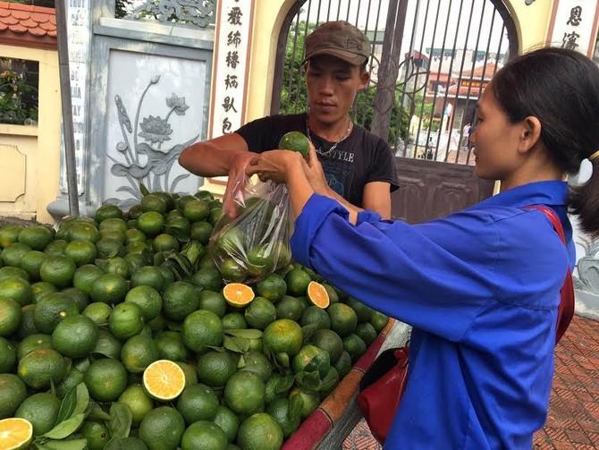thị trường, cam Trung Quốc, cam sành