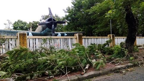 Bão số 4 'tấn công' miền Trung: Cây xanh ngã đổ la liệt, người đi đường bị gió thổi liêu xiêu - ảnh 4