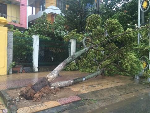 Bão số 4 'tấn công' miền Trung: Cây xanh ngã đổ la liệt, người đi đường bị gió thổi liêu xiêu - ảnh 12