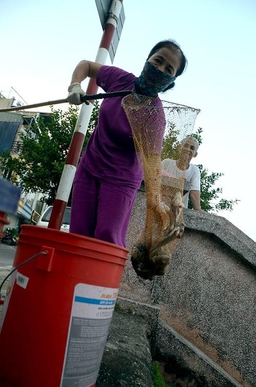 Cá chết bất thường nổi trắng ven Hồ Tây - ảnh 10