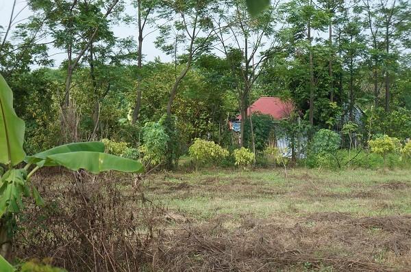 Hình thành nên xóm làng ở bãi giữa sông Hồng. Ảnh Hoàng Long