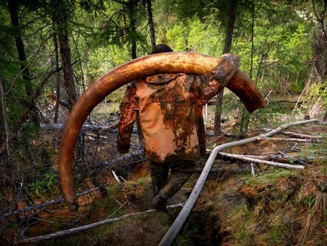 Một số người may mắn tìm thấy ngà voi trong khi những người khác tốn tiền và công sức mà không thu về kết quả.