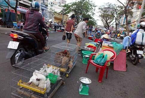 Sẽ cấm bán gà vịt sống tại chợ? - ảnh 3