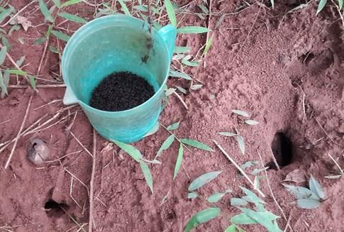 [VIDEO] Hấp dẫn cảnh trẻ em câu dế cơm bằng kiến bò nhọt kiếm thu nhập - ảnh 4