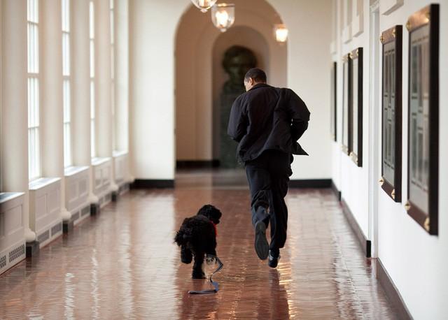 Chú chó của gia đình Obama có tên gọi là Bo.