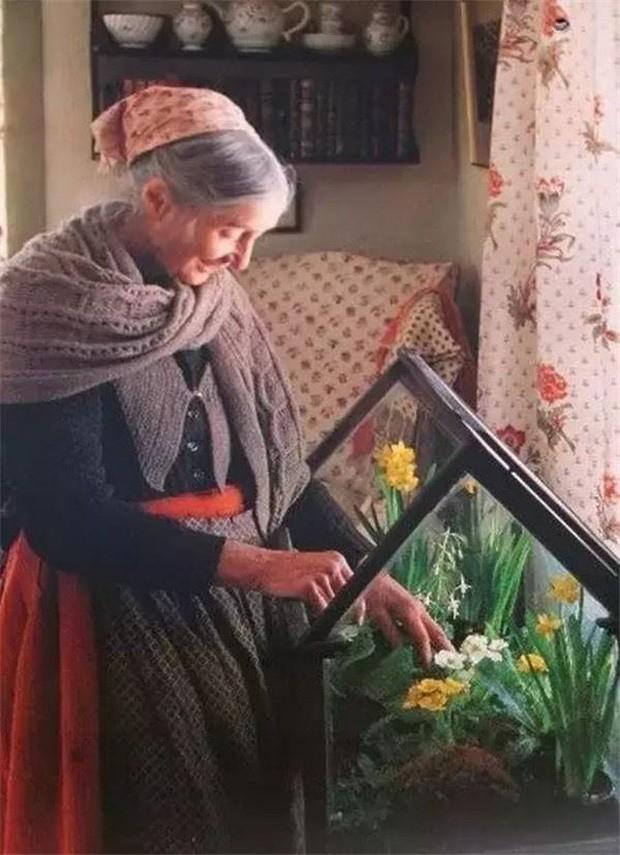 Bên cạnh chăm sóc các cây, hoa ngoài vườn, bà Tasha còn có một nhà kính mini để chăm sóc các loại hoa ưa khí hậu ấm áp.