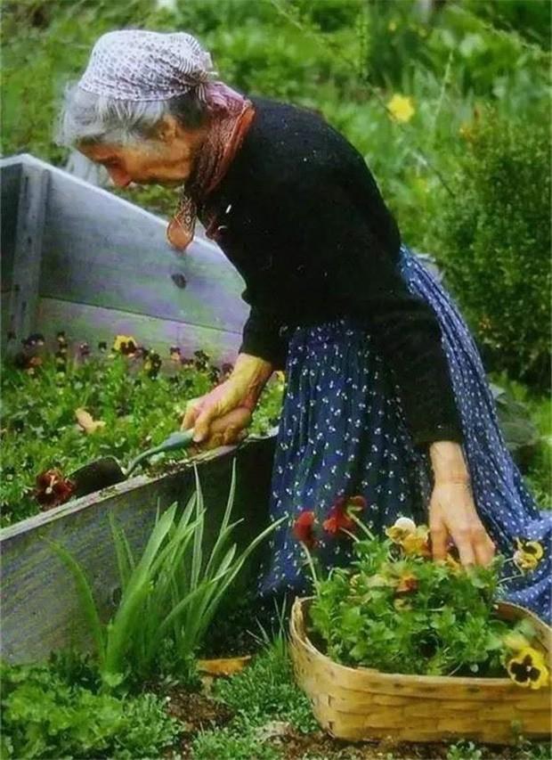 Bà Tasha dành rất nhiều thời gian chăm sóc cho khu vườn của mình.