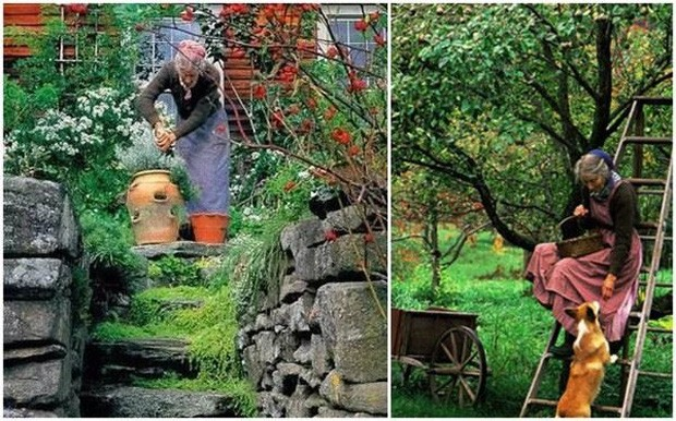 Khu vườn của bà Tasha khiến nhiều người phải mơ ước, ghen tị.