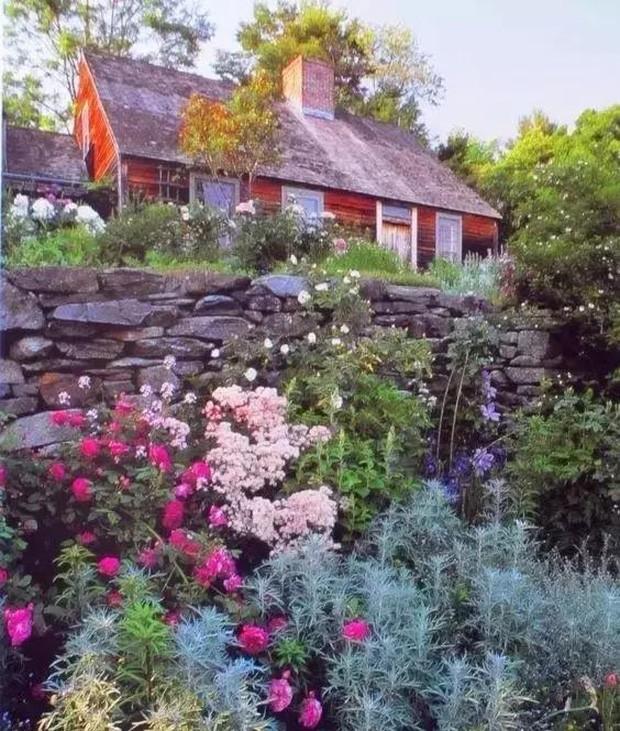 Ngôi nhà của bà Tasha được bao bọc bởi rất nhiều cây, hoa. Chỉ nhìn thôi, cũng thấy sự an yên ở đây.