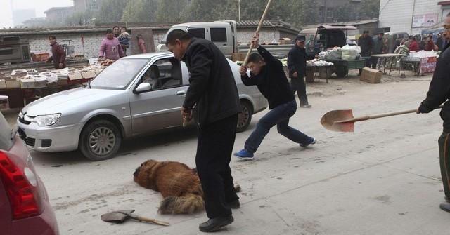 Hàng ngàn con chó ngao Tây Tạng thả rông và sự suy thoái của một thú vui vương quyền ở Trung Quốc - Ảnh 1.
