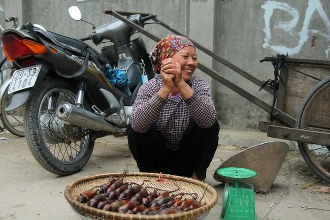Thịt chuột đồng được người dân các xã Canh Nậu, Dị Nậu (Thạch Thất - Hà Nội) xem là đặc sản hiếm có hàng chục năm nay. Cứ từ tháng 9 đến hết tháng 12 (âm lịch) khắp xóm làng đều xuất hiện các địa điểm bán thịt chuột với giá cao đến khó tin.