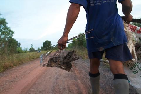 Theo chân thợ bẫy chuột không cần mồi nhử ở Đồng Tháp Mười - ảnh 5