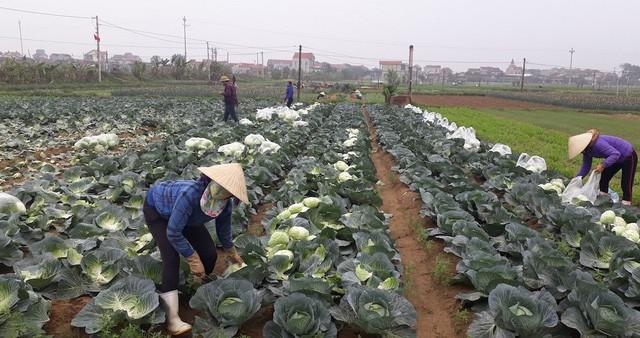 nông sản việt,nông sản rớt giá,nông sản ế ẩm