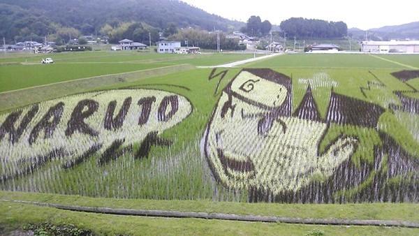 Làng thần kỳ Nhật Bản: Từ nghèo nhất đến nổi tiếng khắp cả nước, doanh số bán gạo tăng 400% nhờ biến ruộng lúa thành tranh - Ảnh 4.