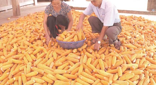 Nhập khẩu một số mặt hàng nông nghiệp chính tăng gần 21%