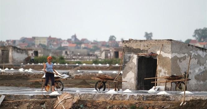 Vị chát hạt muối Quỳnh Lưu