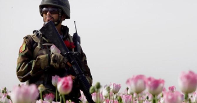 Afghanistan: Hơn 2.000 km² thuốc phiện và 70 tỷ đô la lợi nhuận