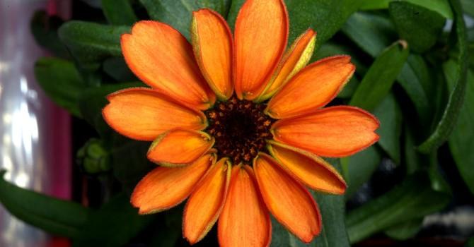 Bông hoa tươi đầu tiên nở xòe trên vũ trụ