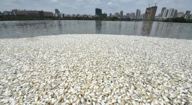 """Trung Quốc """"rúng động"""" vì vụ cá chết hàng loạt ở đảo Hải Nam"""