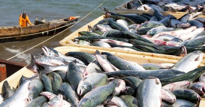 """Mỹ """"ra đòn"""", Nga có thể mất gần 1 tỷ USD/năm từ xuất khẩu hải sản"""
