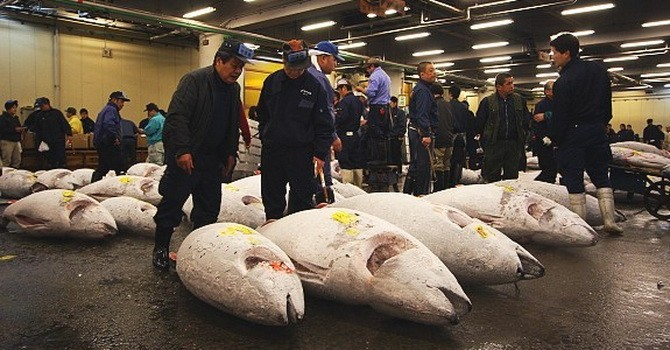 Chợ cá lớn nhất tại Nhật chậm di dời, Olympic Tokyo 2020 gặp khó?