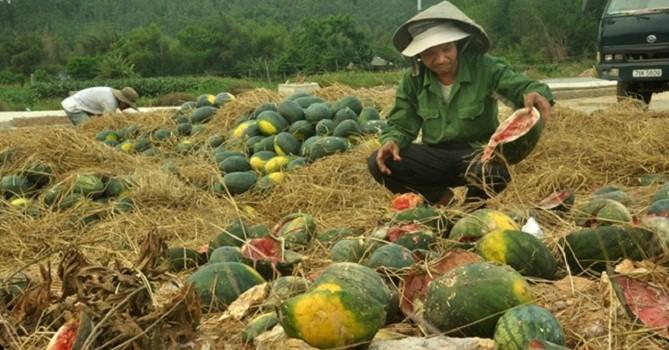 """Nông dân """"dài cổ"""" chờ... giải pháp cho nông sản!"""
