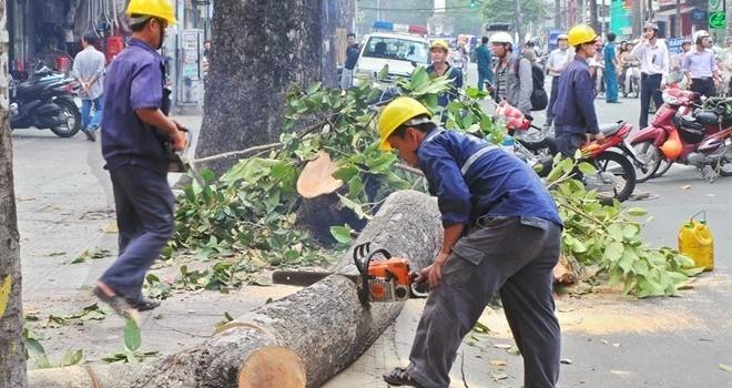 """Vụ Hà Nội chặt cây xanh: """"Các bác yên tâm sẽ xử lý kỷ luật và công khai sớm"""""""