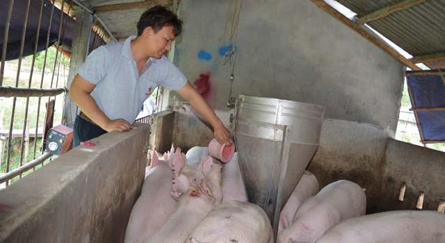 Từ bỏ lương 30 triệu về quê thầu đồng hoang nuôi lợn