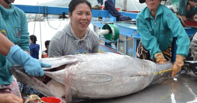 """""""Trúng"""" cá ngừ đại dương cuối vụ"""