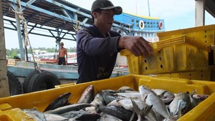 Doanh nghiệp Việt lơ ngơ từ trong ra ngoài